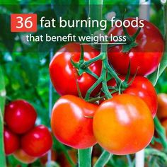 See 36 fat burning foods that can burn calories as you digest them. Plus, these foods help boost metabolism and trigger hormones that fight unwanted fat. Diet Plans To Lose Weight, Losing Weight Tips, Weight Loss Tips, Culture Tomate, 2 Week Diet, Lose 30 Pounds, 10 Pounds, Alkaline Diet, Metabolic Diet