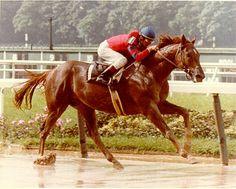 Alydar, Affirmed's (the last Triple Crown winner) rival. Alydar was the first horse to finish second in all three Triple Crown races. I think that goes to show what a talented horse he was. He met an ill, human inflicted death in the end. What a champion.