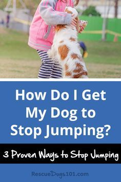 3 Ways to Stop a Dog from Jumping - Nothing more embarrassing than welcoming your guest into your home and your dog jumps and knocks them over!