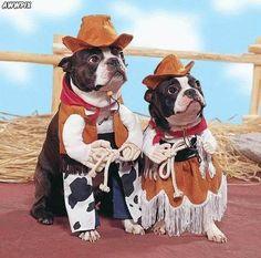 Caption This: ______  #captionthis #dog #funny #costume #dog #funny