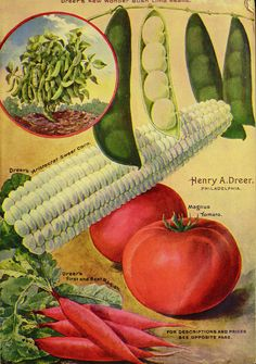 1903 Henry A. Dreer seed catalogue