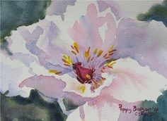 "Tree Peony in Pink by Poppy Balser Watercolor ~ 5"" x 7"""