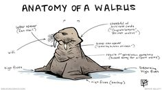 strip for April / 21 / 2015 - Anatomy of a Walrus