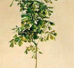 Egon Schiele  Detail
