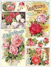 Pink Roses Collage Sheet