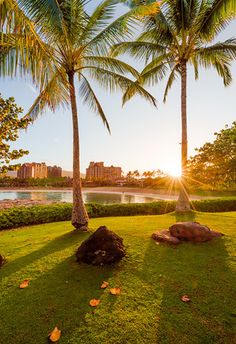 Disney's Aulani Resort & Spa Tips: save money, recommended activities, when to visit, and more!