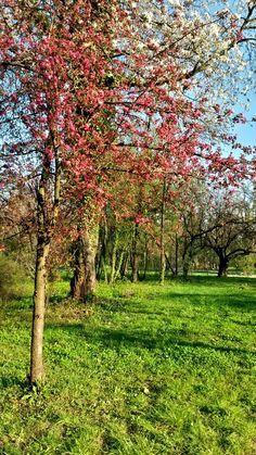 Spring in Bucharest