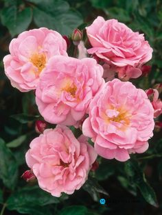 Gardening:Rose Garden Tips And Ideas Gardening Landscape Plans Garden Seating Planting Plan Climbing Rose Flower Yard Decor Small Backyard Landscaping Layout Design Ideas (69) Rose Garden Tips and Plans Ideas : How to Grow a Rose Garden in Pots and Other Flower Container