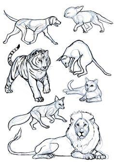 MARTA GRANDE ART - Animal's study part I: Digitigrade. https://www.facebook.com/martagart/ http://martagrandeart.tumblr.com/