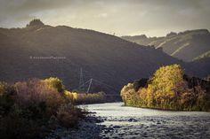 autumn foilage in sunset light along hutt river