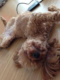 When the floor is wram, she sleeps like that.