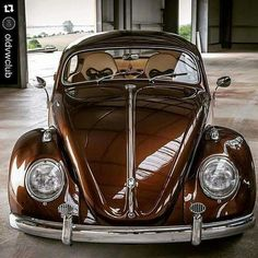 Bug..Re-pin brought to you by agents of #carinsurance at #houseofinsurance in Eugene, Oregon