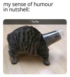 Crazy Funny Memes, Really Funny Memes, Stupid Funny Memes, Funny Relatable Memes, Haha Funny, Hilarious, Funy Memes, Funny Animal Jokes, Cute Funny Animals