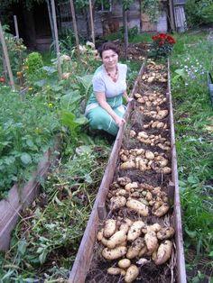 Картофель под соломой Валерии Зашитиной