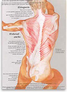 Núria Vives. Anatomía