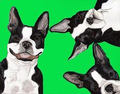 8x10 BOSTON TERRIER Dogs Red Signed 8x10 Dog Art PRINT of Original Painting VERN