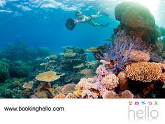 VIAJES EN PAREJA. Si ya decidiste viajar a Punta Cana en tus próximas vacaciones, en Booking Hello te recomendamos atreverte a vivir toda la aventura de explorar el Caribe con tu pareja, haciendo snorkeling. Esta actividad les permitirá apreciar los arrecifes y toda la fauna marina; definitivamente una gran oportunidad para disfrutar de las cálidas aguas del Caribe y sus especies. #escapatealcaribe