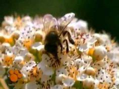 Video abejas Educación infantil - YouTube