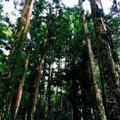 【og24og24】さんのInstagramをピンしています。 《明日も頑張ろー😑💭 もうほとんど体力の充電切れ😂😂 #photo_jpn#art_of_japan_#photo#photooftheday#写真#love#写真好きな人と繋がりたい#good#like#girl#カメラ女子#view#beautiful#green#color#nature#森林#filmwalkr#ファインダー越しの私の世界#winter#big#instagood#instalike#景色#me#world》