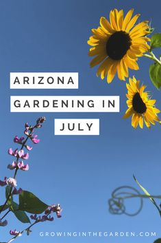 Arizona Gardening in July including checklist for garden and what to plant #gardening #desertgardening #howtogarden #summergarden #hotgardening