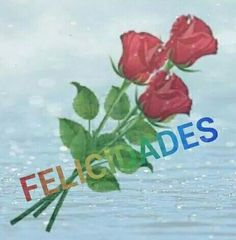 Rosa rojas