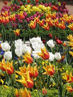 ***** Tulips in Topkapi gardens, Istanbul /Turkey Blooming Flowers, Spring Flowers, Most Beautiful Gardens, Beautiful Places, Turkey Vacation, Ephesus, Ottoman Empire, Istanbul Turkey, Spring Garden