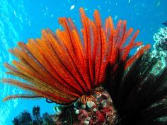Top Diving Reefs On The Great Barrier Reef