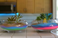 Fun and easy, outdoor and summer friendly kid activity. These sand art terrariums are the cutest things ever! Air Plants, Cactus Plants, Indoor Plants, Succulent Plants, Indoor Gardening, Succulent Arrangements, Planting Succulents, Mini Zen Garden, Terrarium Plants