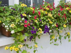 Add a Container Garden to Your Windowsills