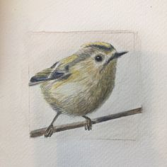 Goldcrest by Alexandra Owen Bird Drawings, Animal Drawings, Tiny Shop, Bird Paintings, No One Loves Me, Painting & Drawing, Still Life, Watercolor, Animals