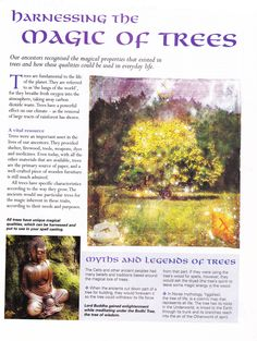 Herbs: Harnessing the Magic of #Trees.