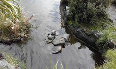 tartarughe al parco rocca