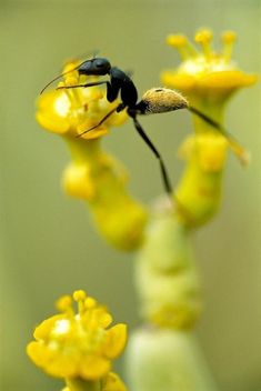 Insect - sweet image