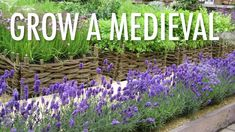 How To Make A Medieval Physic Garden A beautiful, serene and healing place, Fountains Abbey in North Backyard Vegetable Gardens, Outdoor Gardens, Tropical Landscaping, Landscaping Ideas, Garden Landscaping, Michigan Landscaping, Landscaping Equipment, Backyard Ideas, Ground Cover Plants