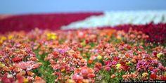 Travel flowers