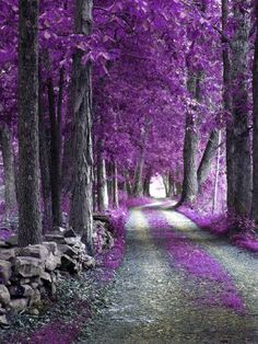 Textures Nature Misc The Purple Forest Wallpaper Purple Love, All Things Purple, Shades Of Purple, Purple Rain, Purple Stuff, Beautiful World, Beautiful Places, Beautiful Scenery, Forest Wallpaper