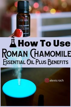 Learn how to use roman chamomile essential oil for skin and health based on science! Chamomile Oil, Chamomile Essential Oil, Roman Chamomile, Essential Oils For Skin, Health And Fitness Articles, Health Advice, Cold Home Remedies, Best Skincare Products, Oil Benefits