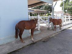O GRITO DO BICHO 3: Prefeitura resgata 19 cavalos em uma semana de ope... Horses, Town Hall, Animales, Agriculture