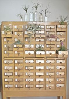 What great use of an old card index!air plant cabinet of curiosities