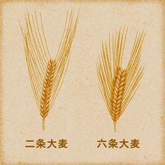 Food Science Japan: Nikka Whiskey and Barley Varieties