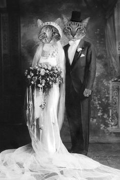 Clothed Cats : Kitty Bride and Groom Cool Cats, I Love Cats, Crazy Cat Lady, Crazy Cats, Costume Chat, Animal Gato, Photo Chat, Cat People, Animal Heads