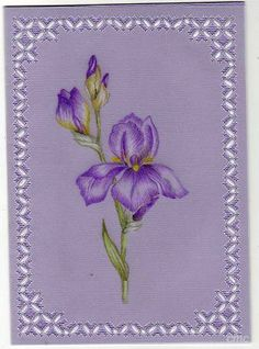 By Carolyn C.  Parchment card coloured with polychromo pencils. Iris flower.