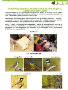 ¿Construimos nidos? - Turismo de Cantabria - Portal Oficial de Turismo de Cantabria - Cantabria - España