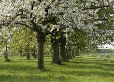 Website van Natuurmonumenten over het behoud van de natuur in Nederland.