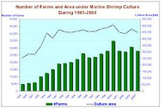 Image result for shrimp culture