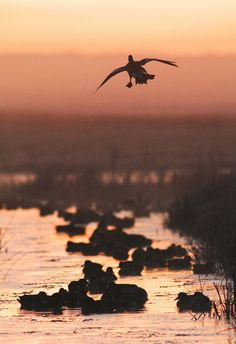 Photograph Landing by Robert Canis on 500px