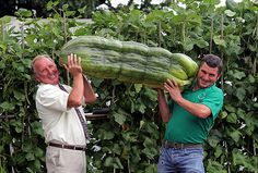 Father and son with 51 pound prize winning Zucchini