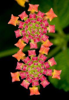 Geometry Exotic flowers