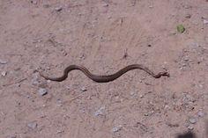 Snake in Sant Miquel del Fai (@StMiqueldelFai photo)