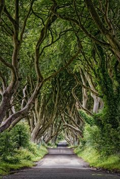 The Dark Hedges by Andy Gibson on Forest Art, Magical Forest, Beech Tree, Hedges, Outdoor Spaces, The Darkest, Waterfall, Castle, Country Roads